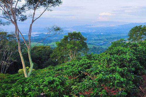 Costa Rica - Hacienda Sanora - Per Kg