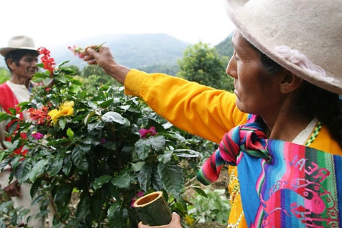 Peru  -  Triple Certified Coffee Per Kg