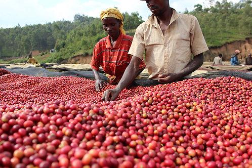 Burundi Kayanza  -  Per Kg