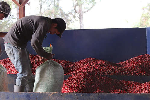 Guatemala Huehuetenango Domingo Lopez FTO - Per Kg