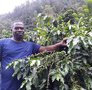 "Jamaican Blue Mountain ""Ms Tita"" Small Farmers"