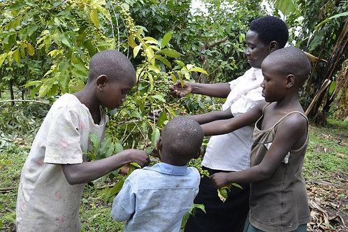 Western Ugandan Arabica - Rwenzori - Per Kg