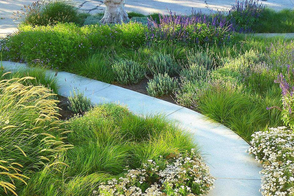Insite landscape design meadow garden after meadow garden workwithnaturefo
