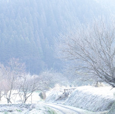 冬のある日 阿蘇