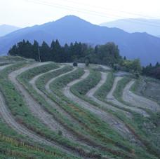 徳島上勝町の棚田