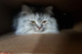 Photo of Falafel the cat