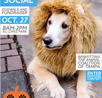Fetch Social - Connecting the dog community!