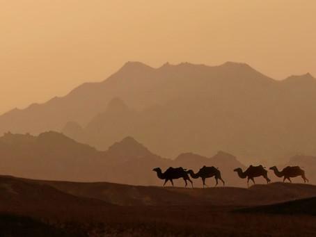 Trusting God in the Desert