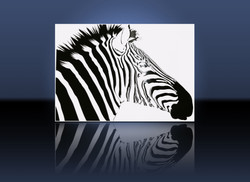 Zebra with Vivid UV