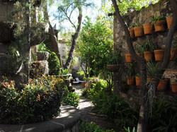 CasaTortugas_21 garden