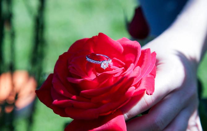 Elizabeth Park Engagement