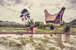 photographe-bruxelles-indonesie-marco-huguenin-32