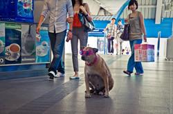 photographe-bruxelles-bangkok-marco-huguenin-61