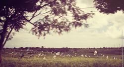 photographe-bruxelles-indonesie-marco-huguenin-29