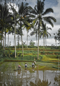 photographe-bruxelles-indonesie-marco-huguenin-60