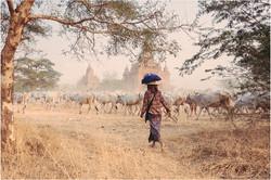 Birmanie-Mars-2016-2048-096