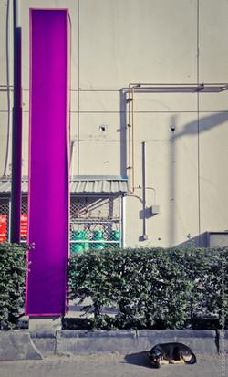 photographe-bruxelles-bangkok-marco-huguenin-36