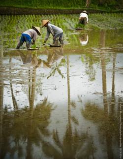 photographe-bruxelles-indonesie-marco-huguenin-61