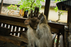 photographe-bruxelles-indonesie-marco-huguenin-39