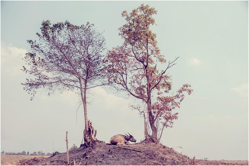 Birmanie-Mars-2016-2048-119