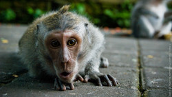 photographe-bruxelles-indonesie-marco-huguenin-58