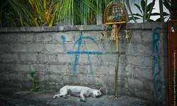 photographe-bruxelles-indonesie-marco-huguenin-64