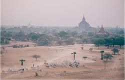 Birmanie-Mars-2016-2048-082