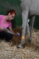 Chromothérapie cheval