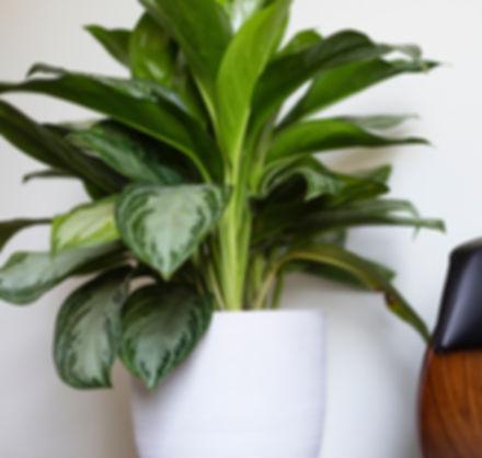 abonnement plante
