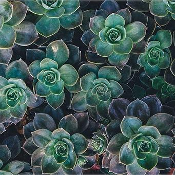 plante entreprise