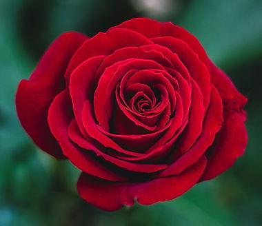 rose deuil