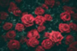 fleurs producteurs frais saison