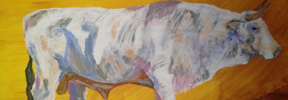 The Charolais Bull