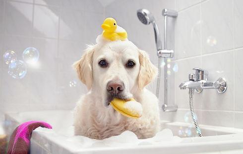 Dog-in-a-Bathtub_edited.jpg
