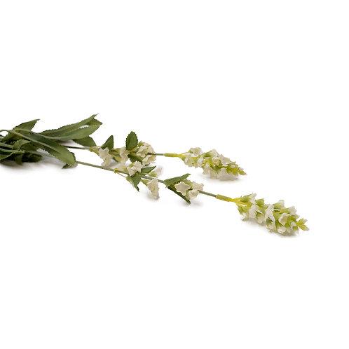 鼠尾草 (白)