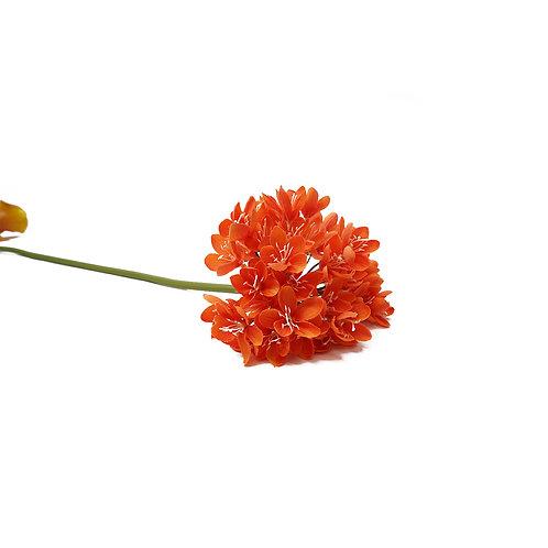 百子蓮 (橙)