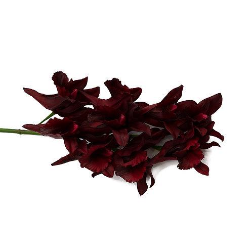 石斛蘭(紅)