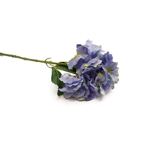 繡球花 (彩)