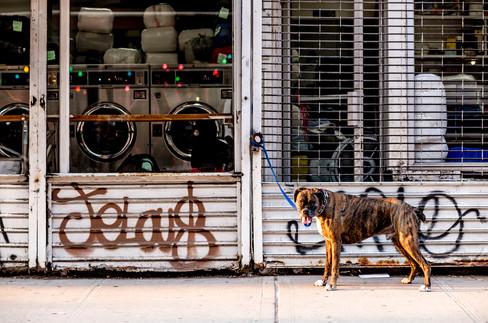 Jelou$ Dog.jpg
