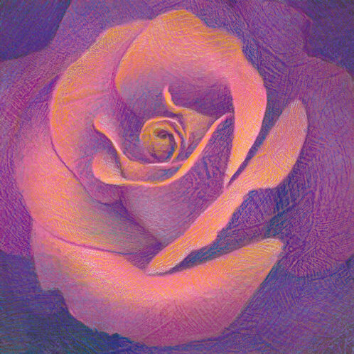fluorescent rose