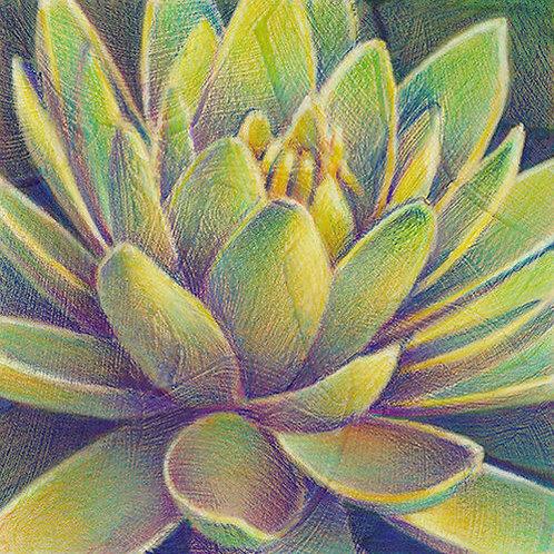 yellow-green lotus