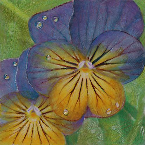 yellow purple pansy