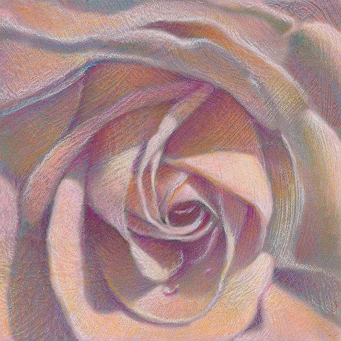 garden of eden rose