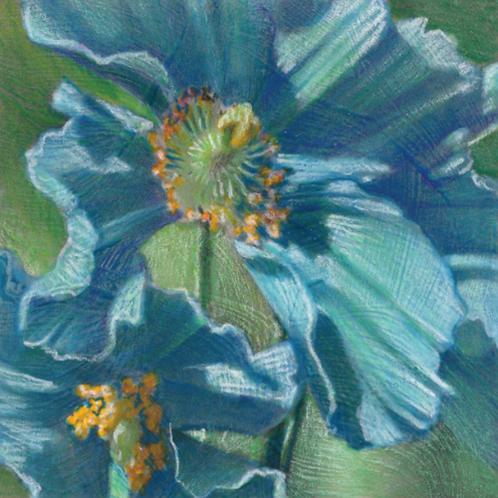blue-green poppy