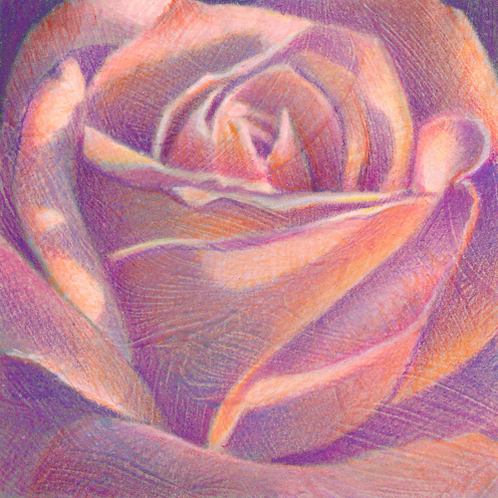 Tuesday Rose