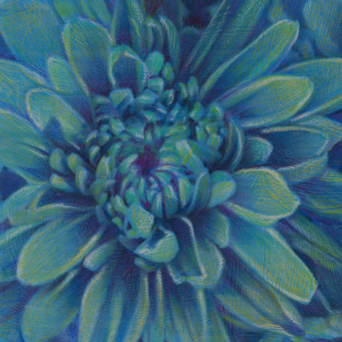 blue-green dahlia