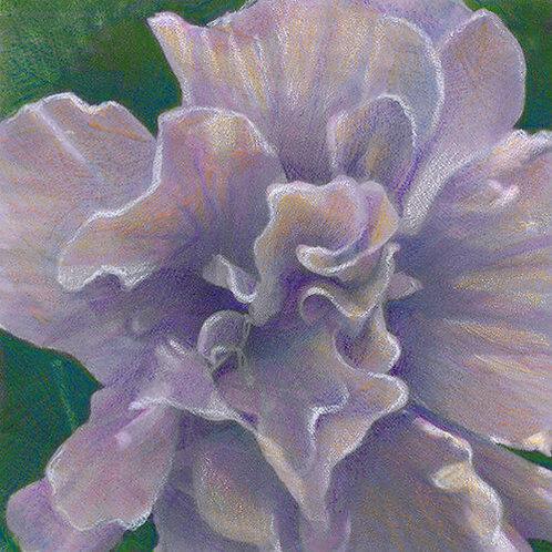 pastel purple peony