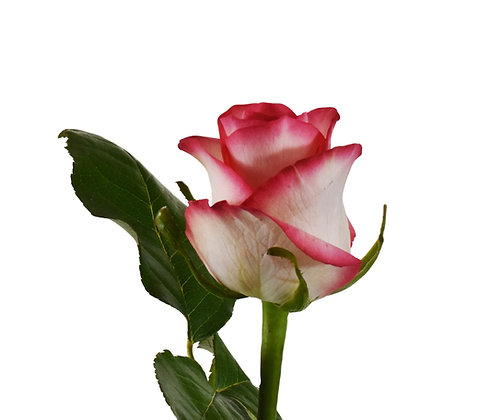 Rose Pink Jumilia