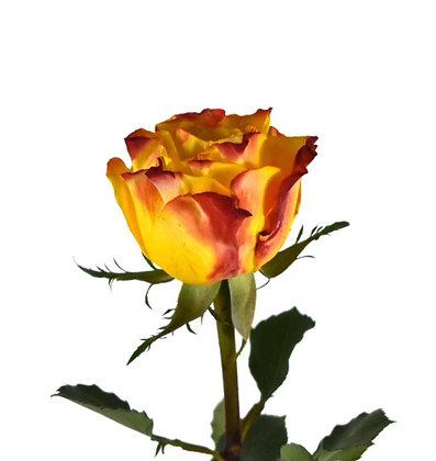 Rose Flaming Hot