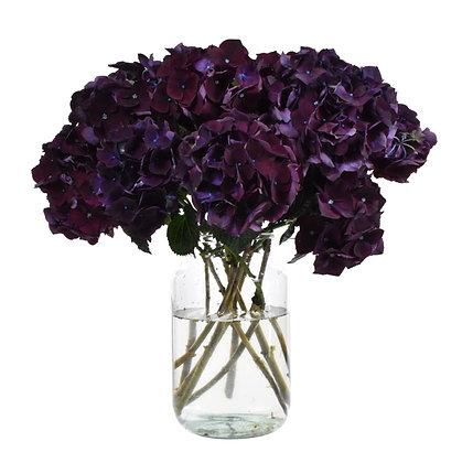 Magical Rubyred Purple